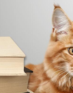 3 cărți care te ajută să îmbrățișezi diversele schimbari